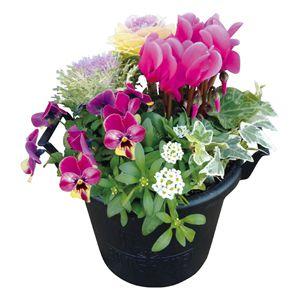 花の海 冬の寄せ植え(SUSTEE付き) (お届け期間:12/11〜12/31) 【冬ギフト・お歳暮】