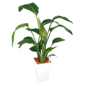 GRIP 観葉植物「ストレチア」(SUSTEE付き) (お届け期間:11/21〜12/28) 【冬ギフト・お歳暮】