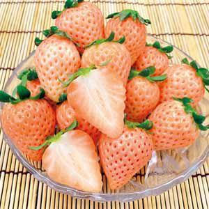 奈良県産 白いちご (お届け期間:12/17〜12/31) 【冬ギフト・お歳暮】