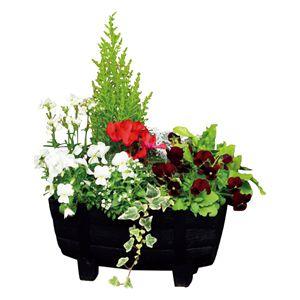 花の海 クリスマスの寄せ植え(SUSTEE付き) (お届け期間:12/11〜12/22) 【冬ギフト・お歳暮】