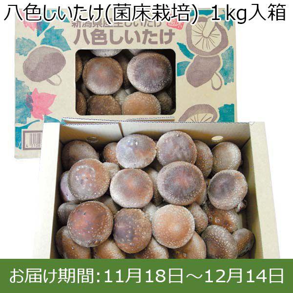 新潟県産 八色しいたけ(菌床栽培)1kg入箱【ふるさとの味・北陸信越】