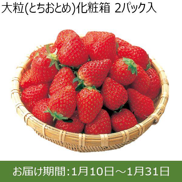 茨城県JA茨城旭村 大粒いちご(とちおとめ)化粧箱 2パック入【ふるさとの味・北関東】