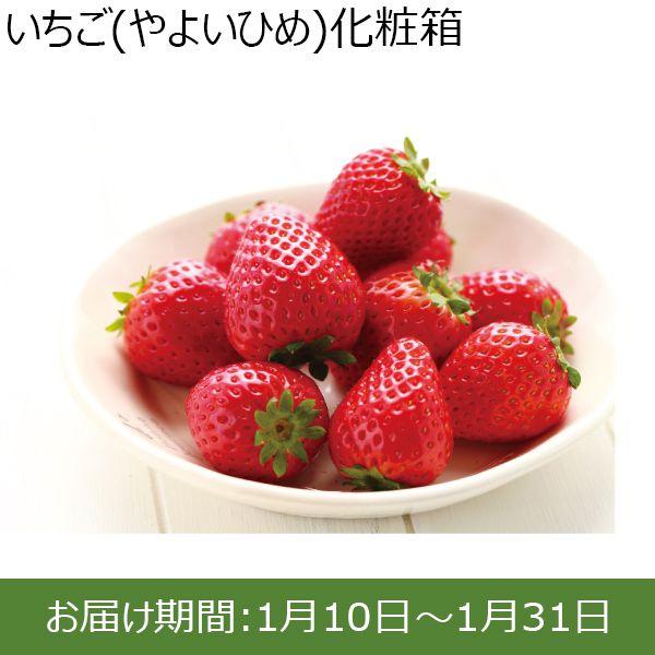茨城県鉾田市産 いちご(やよいひめ)化粧箱 2パック入【ふるさとの味・北関東】