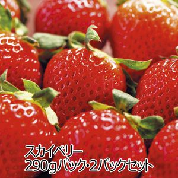 栃木県産JA佐野 スカイベリー 290gパック・2パックセット【ふるさとの味・北関東】